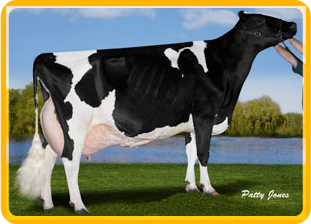 Quality Holsteins Pam