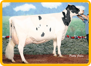 Quality Holsteins Frantisco